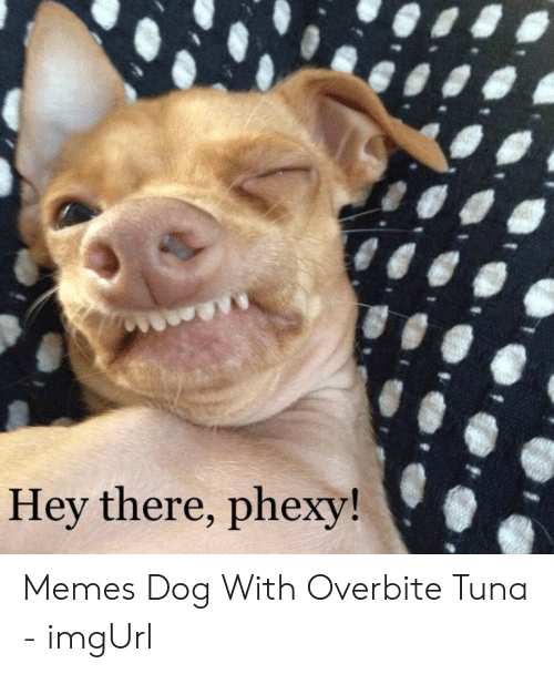 Hey There Phexy! Memes Dog With Overbite Tuna - imgUrl