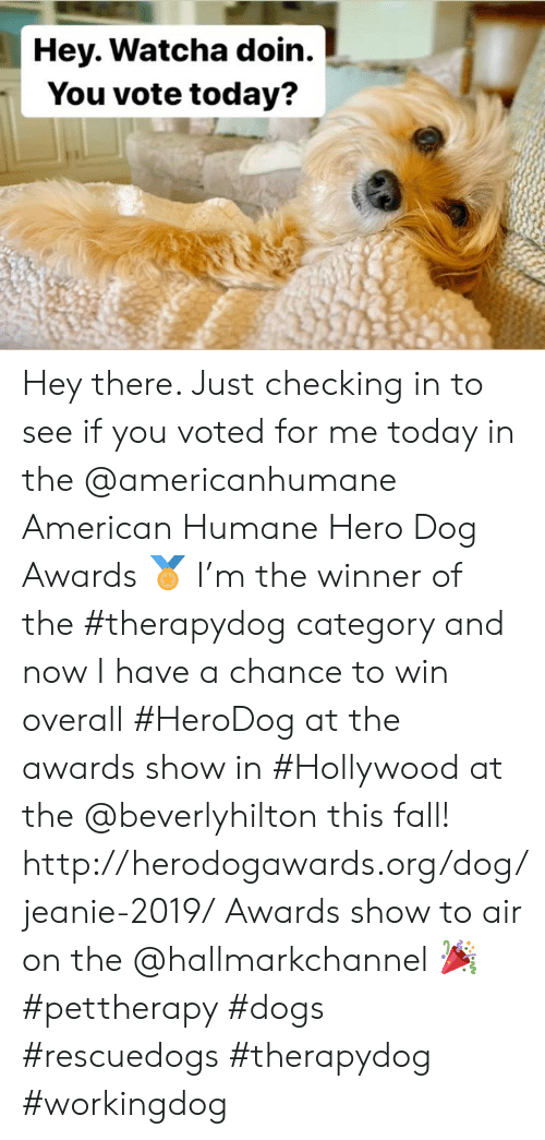 Hallmarkchannel: Hey. Watcha doin.  You vote today? Hey there. Just checking in to see if you voted for me today in the @americanhumane American Humane Hero Dog Awards 🏅 I'm the winner of the #therapydog category and now I have a chance to win overall #HeroDog at the awards show in #Hollywood at the @beverlyhilton this fall!  http://herodogawards.org/dog/jeanie-2019/ Awards show to air on the @hallmarkchannel 🎉  #pettherapy #dogs  #rescuedogs #therapydog #workingdog