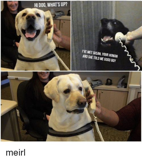 Good, MeIRL, and Boy: HI DOG, WHATS UP?  I'VE MET SUSAN, YOUR HUMAN  AND SHE TOLD ME GOOD BOY meirl