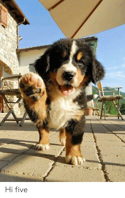 Hi Five, Five, and Hi: Hi five