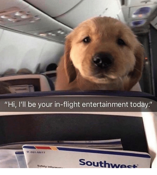 """Southwest: """"Hi, I'll be your in-flight entertainment today.""""  -551-08/17  Southwest  Safety"""
