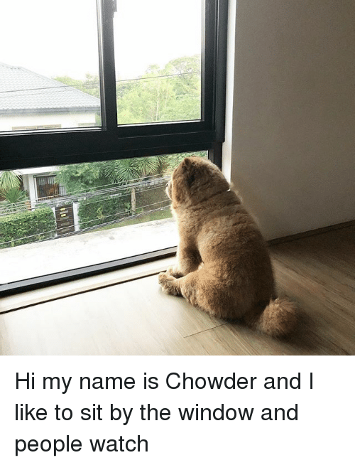 Memes, Watch, and Chowder: Hi my name is Chowder and I like to sit by the window and people watch