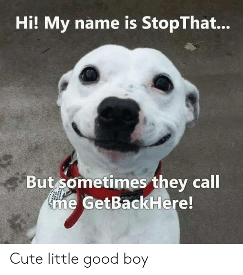 They Call Me: Hi! My name is StopThat...  But sometimes they call  me GetBackHere! Cute little good boy