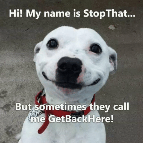 They Call Me: Hi! My name is StopThat...  But sometimes they call  me GetBackHere!