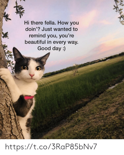 Beautiful, Memes, and Good: Hi there fella. How you  doin'? Just wanted to  remind you, you're  beautiful in every way  Good day:) https://t.co/3RaP85bNv7
