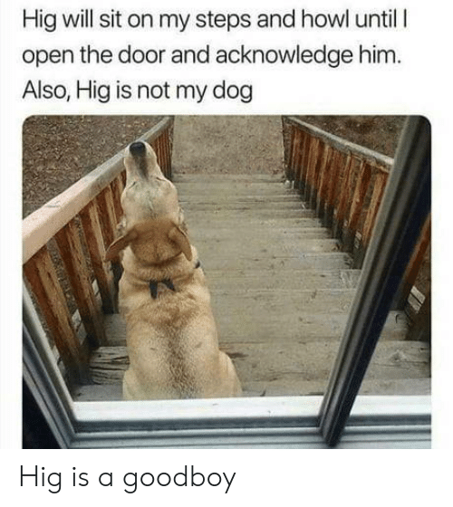 Goodboy: Hig will sit on my steps and howl until l  open the door and acknowledge him.  Also, Hig is not my dog Hig is a goodboy