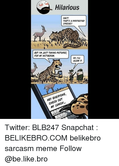 Be Like, Meme, and Memes: Hilarious  HALT!  THAT'S A PROTECTED  SPECIES  BUT M JUST TAKING PICTURE  FOR MYINSTAGRAM  OR ILL  ALLOW IT  HEY EVERYONE,  CHECK OUT  MY LUNCH! Twitter: BLB247 Snapchat : BELIKEBRO.COM belikebro sarcasm meme Follow @be.like.bro
