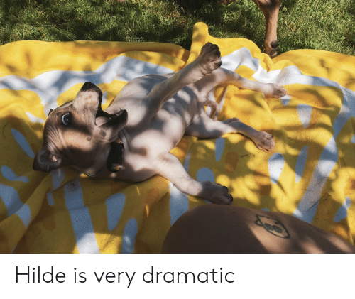 Dramatic,  Hilde, and Very: Hilde is very dramatic