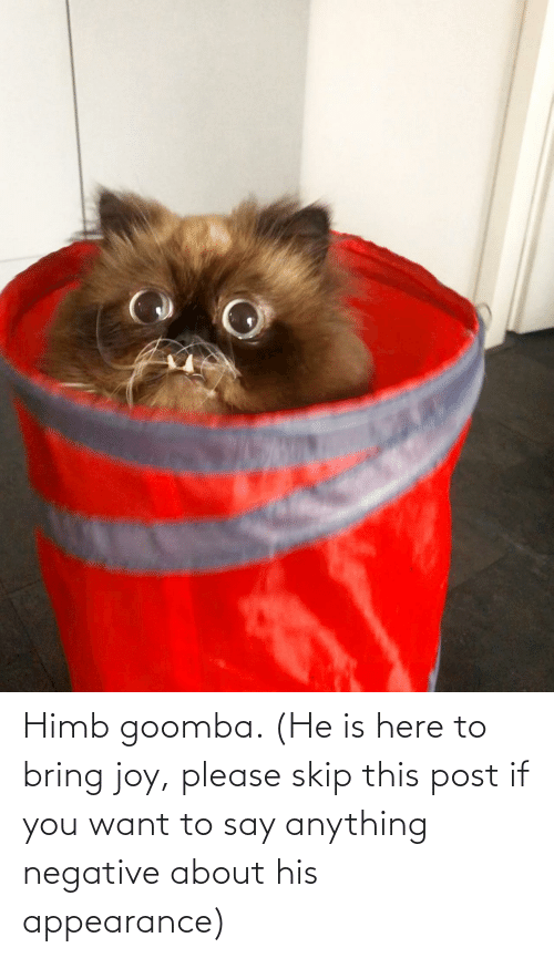 anything: Himb goomba. (He is here to bring joy, please skip this post if you want to say anything negative about his appearance)