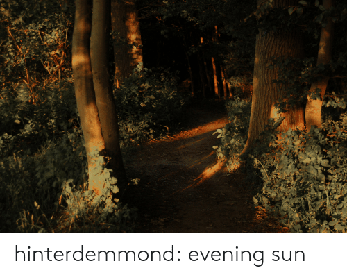 Tumblr, Blog, and Http: hinterdemmond: evening sun