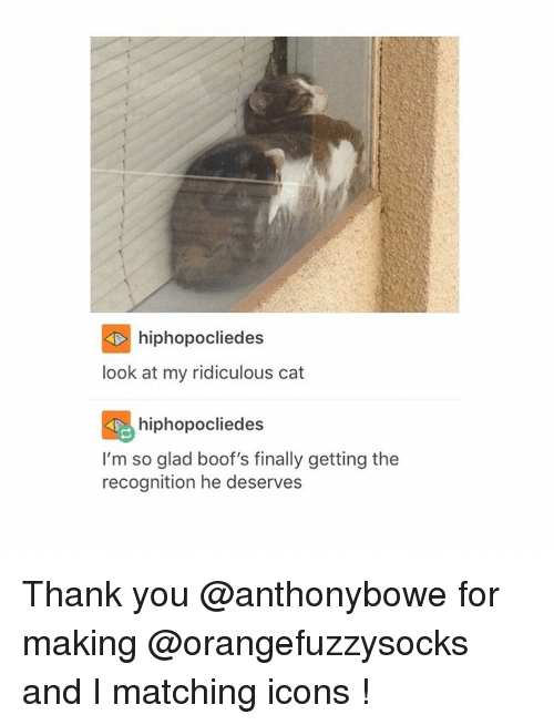 Boofing: hiphopocliedes  look at my ridiculous cat  hiphopo cliedes  I'm so glad boof's finally getting the  recognition he deserves Thank you @anthonybowe for making @orangefuzzysocks and I matching icons !