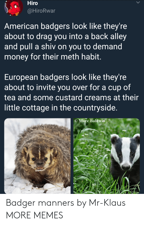 badger: Hiro  @HiroRwar  American badgers look like they're  about to drag you into a back alley  and pull a shiv on you to demand  money for their meth habit  European badgers look like they're  about to invite you over for a cup of  tea and some custard creams at their  little cottage in the countryside.  C Marc Baldwin Badger manners by Mr-Klaus MORE MEMES