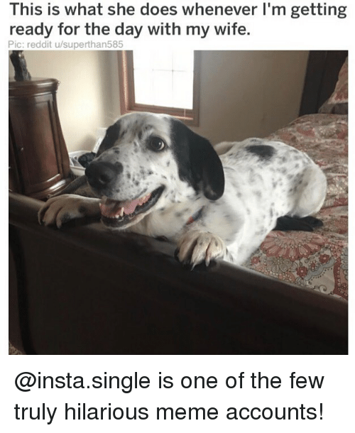 hilarious meme: his is what she does whenever I'm getting  ready for the day with my wife.  Pic: reddit u/superthan585 @insta.single is one of the few truly hilarious meme accounts!