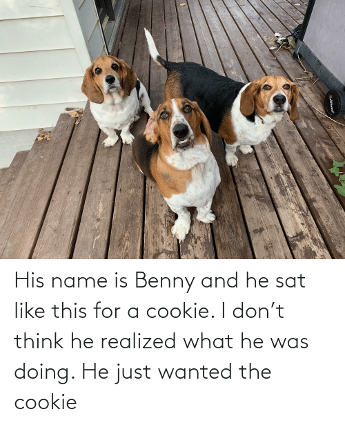 sat: His name is Benny and he sat like this for a cookie. I don't think he realized what he was doing. He just wanted the cookie