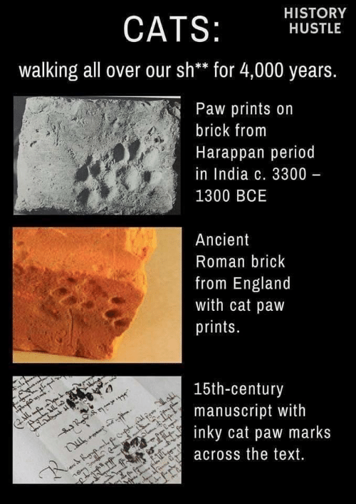 Roman: HISTORY  CATS:  HUSTLE  walking all over our sh** for 4,000 years.  Paw prints on  brick from  Harappan period  in India c. 3300 -  1300 BCE  Ancient  Roman brick  from England  with cat paw  prints.  15th-century  manuscript with  inky cat paw marks  IL  across the text.  R