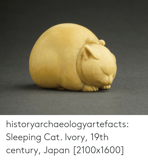 Tumblr, Blog, and Japan: historyarchaeologyartefacts: Sleeping Cat. Ivory, 19th century, Japan [2100x1600]