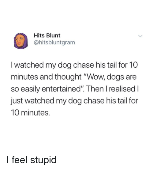 """Dogs, Wow, and Chase: Hits Blunt  @hitsbluntgram  I watched my dog chase his tail for 10  minutes and thought """"Wow, dogs are  so easily entertained"""". Then I realised I  just watched my dog chase his tail for  10 minutes. I feel stupid"""