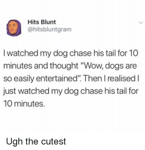 """Dogs, Wow, and Chase: Hits Blunt  @hitsbluntgram  I watched my dog chase his tail for 10  minutes and thought """"Wow, dogs are  so easily entertained"""". Then I realised I  just watched my dog chase his tail for  10 minutes. Ugh the cutest"""