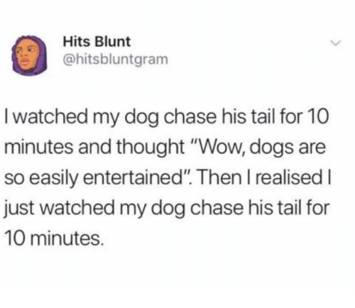 """Dank, Dogs, and Wow: Hits Blunt  @hitsbluntgram  I watched my dog chase his tail for 10  minutes and thought """"Wow, dogs are  so easily entertained"""". Then I realised I  just watched my dog chase his tail for  10 minutes."""