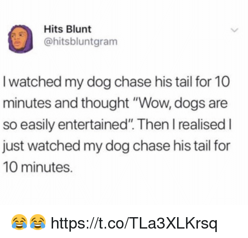 """Dogs, Funny, and Wow: Hits Blunt  @hitsbluntgram  I watched my dog chase his tail for 10  minutes and thought """"Wow, dogs are  so easily entertained"""". Then I realised I  just watched my dog chase his tail for  10 minutes. 😂😂 https://t.co/TLa3XLKrsq"""