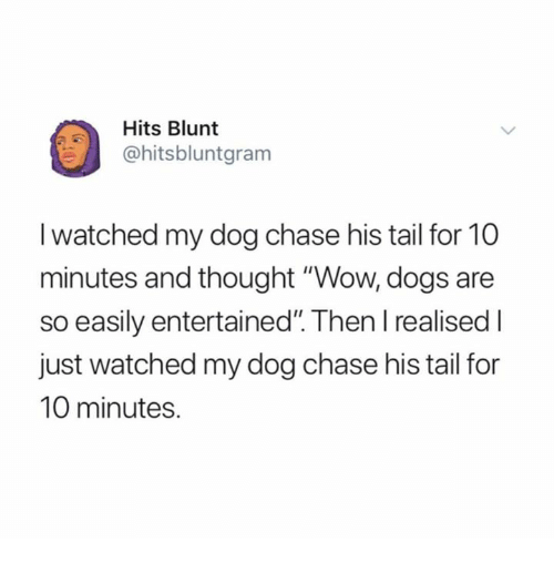 """Dogs, Wow, and Chase: Hits Blunt  @hitsbluntgram  I watched my dog chase his tail for 10  minutes and thought """"Wow, dogs are  so easily entertained"""". Then l realised I  just watched my dog chase his tail for  10 minutes."""