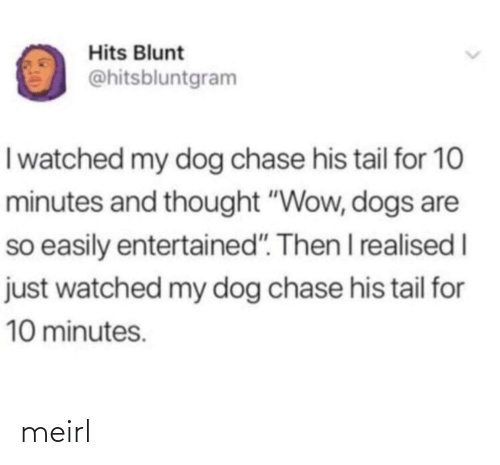 "Watched: Hits Blunt  @hitsbluntgram  I watched my dog chase his tail for 10  minutes and thought ""Wow, dogs are  so easily entertained"". Then I realised I  just watched my dog chase his tail for  10 minutes. meirl"