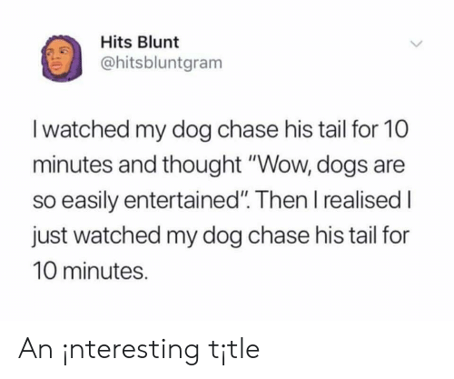 """Entertained: Hits Blunt  ohitsbluntgram  I watched my dog chase his tail for 10  minutes and thought """"Wow, dogs are  so easily entertained"""". Then I realised I  just watched my dog chase his tail for  10 minutes. An ¡nteresting t¡tle"""