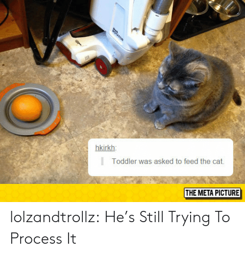 Tumblr, Blog, and Http: hkirkh  Toddler was asked to feed the cat.  THE META PICTURE lolzandtrollz:  He's Still Trying To Process It