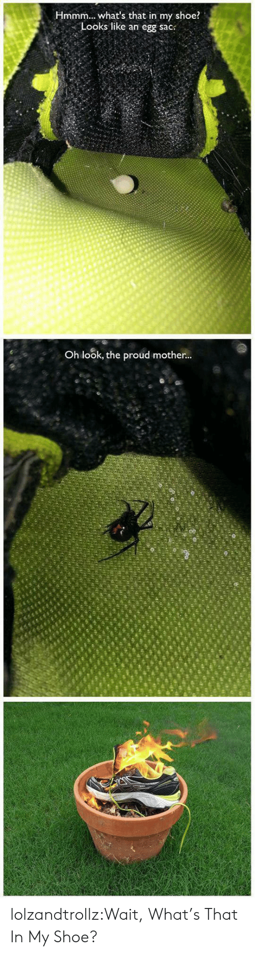 Tumblr, Blog, and Proud: Hmmm., what's that in my shoe?  Looks like an egg sac:  Oh look, the proud mother lolzandtrollz:Wait, What's That In My Shoe?