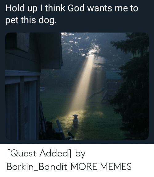 Dank, God, and Memes: Hold up I think God wants me to  pet this dog. [Quest Added] by Borkin_Bandit MORE MEMES
