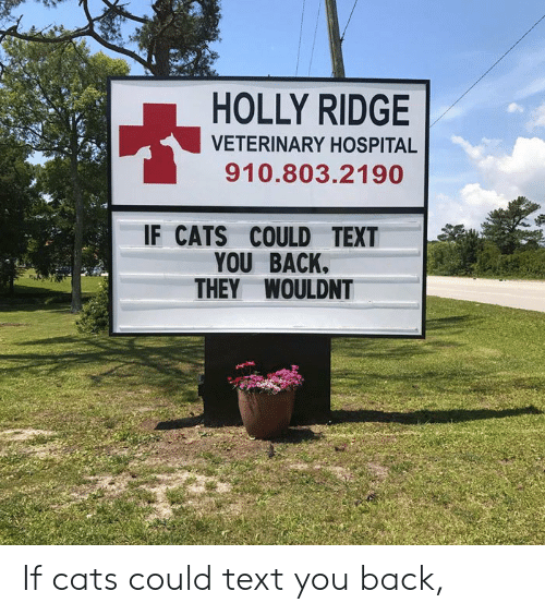 Holly: HOLLY RIDGE  VETERINARY HOSPITAL  910.803.2190  IF CATS COULD TEXT  YOU BACK.  THEY WOULDNT If cats could text you back,