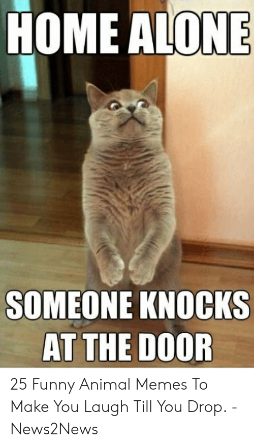 Laugh Till: HOME ALONE  SOMEONE KNOCKS  AT THE DOOR 25 Funny Animal Memes To Make You Laugh Till You Drop. - News2News