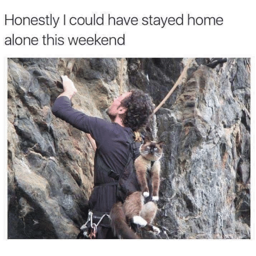 Being Alone, Home Alone, and Memes: Honestly I could have stayed home  alone this weekend