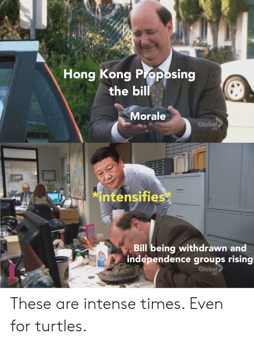 Reddit, Hong Kong, and Intensifies: Hong Kong Pioposing  the bill  Morale  Global  HD  *intensifies  Bill being withdrawn and  independence groups rising  Global  A PRPOS  GLUE  HD These are intense times. Even for turtles.