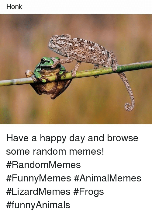 Memes, Happy, and Random: Honk Have a happy day and browse some random memes! #RandomMemes #FunnyMemes #AnimalMemes #LizardMemes #Frogs #funnyAnimals