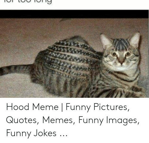 Hood Meme | Funny Pictures Quotes Memes Funny Images Funny ...