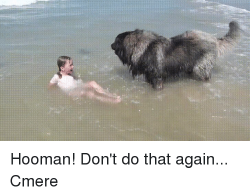 Funny,  Dont, and  Again: Hooman! Don't do that again... Cmere