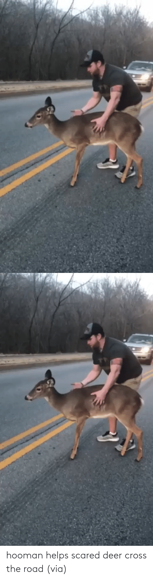 Cross: hooman helps scared deer cross the road (via)