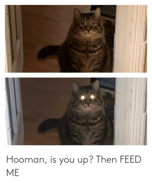 feed me: Hooman, is you up? Then FEED ME