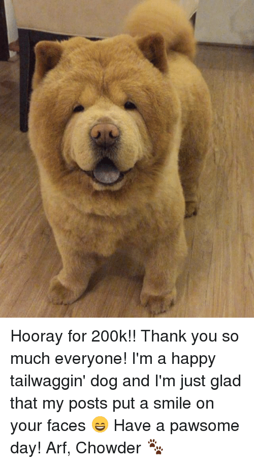 Memes, Thank You, and Happy: Hooray for 200k!! Thank you so much everyone! I'm a happy tailwaggin' dog and I'm just glad that my posts put a smile on your faces 😄 Have a pawsome day! Arf, Chowder 🐾