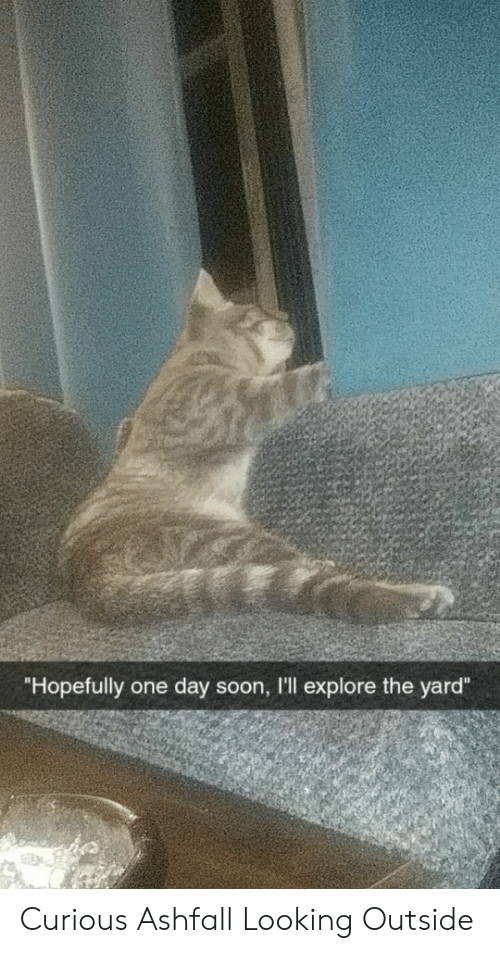 "Soon..., Looking, and One: ""Hopefully one day soon, I'll explore the yard"" Curious Ashfall Looking Outside"