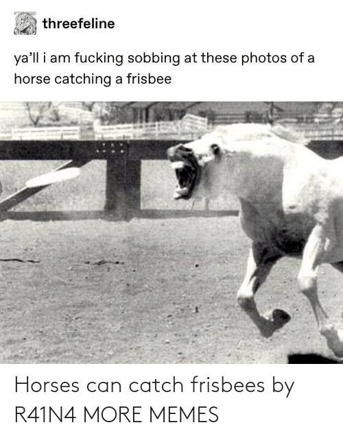Horses: Horses can catch frisbees by R41N4 MORE MEMES
