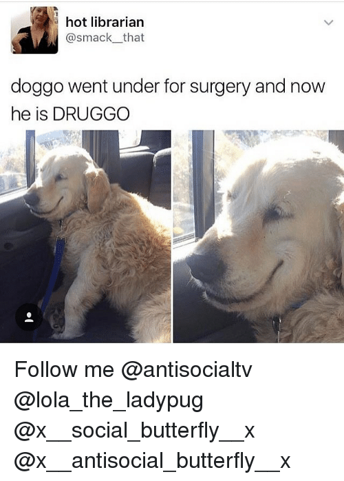 Memes, Butterfly, and Antisocial: hot librarian  @smack that  doggo went under for surgery and now  he is DRUGGO Follow me @antisocialtv @lola_the_ladypug @x__social_butterfly__x @x__antisocial_butterfly__x