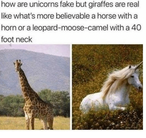 Believable: how are unicorns fake but giraffes are real  like what's more believable a horse with a  horn or a leopard-moose-camel with a 40  foot neck
