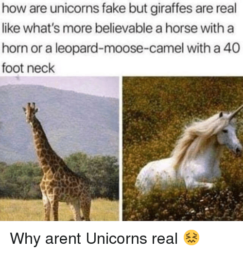 Believable: how are unicorns fake but giraffes are real  like what's more believable a horse with a  horn or a leopard-moose-camel with a 40  foot neck Why arent Unicorns real 😖