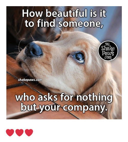 Paws: How beautiful is it  to find someone,  Shake  Paws  Com  shakepaws.com  who asks for nothing  but your company. ❤️❤️❤️