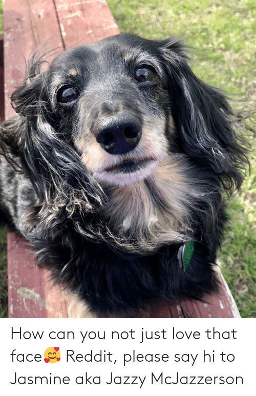 jasmine: How can you not just love that face🥰 Reddit, please say hi to Jasmine aka Jazzy McJazzerson