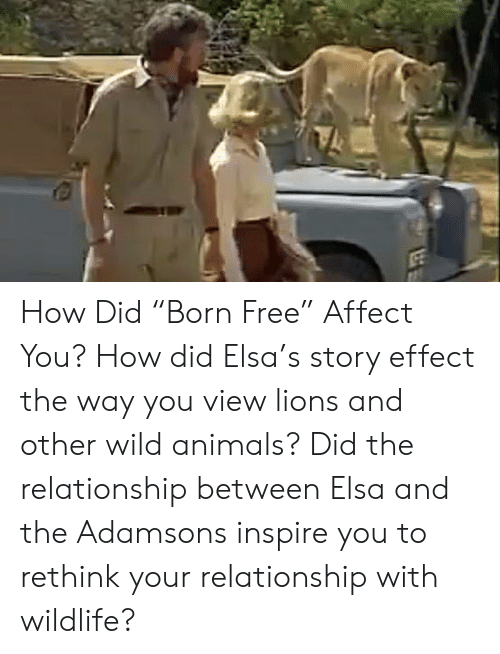 "Animals, Elsa, and Memes: How Did ""Born Free"" Affect You?  How did Elsa's story effect the way you view lions and other wild animals? Did the relationship between Elsa and the Adamsons inspire you to rethink your relationship with wildlife?"