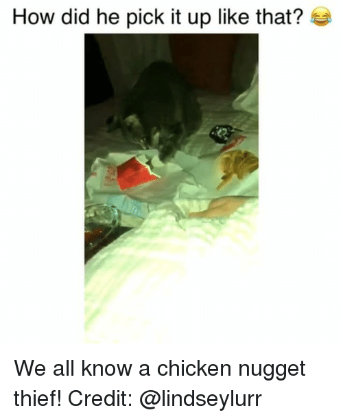 chicken nugget: How did he pick it up like that? We all know a chicken nugget thief! Credit: @lindseylurr