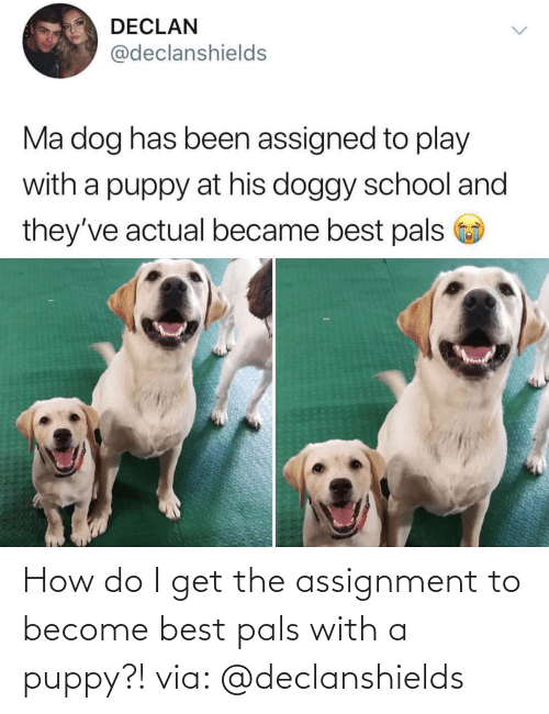 Best, Puppy, and How: How do I get the assignment to become best pals with a puppy?! via: @declanshields